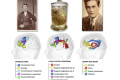 3 cervelli importanti