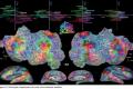 Una mappa semantica del cervello